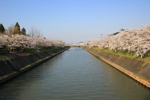 鏝絵と下条川千本桜まつりの画像