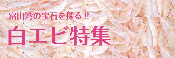 富山湾の宝石を探る!白エビ特集